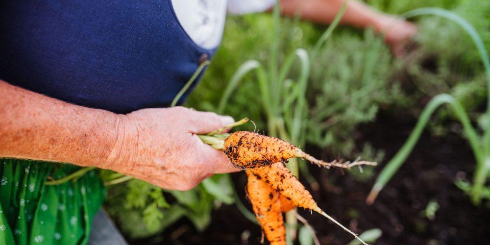 EF Hochbeet Karotten Hochbeet