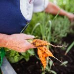 EF Hochbeet Karotten Hochbeet Easyfit