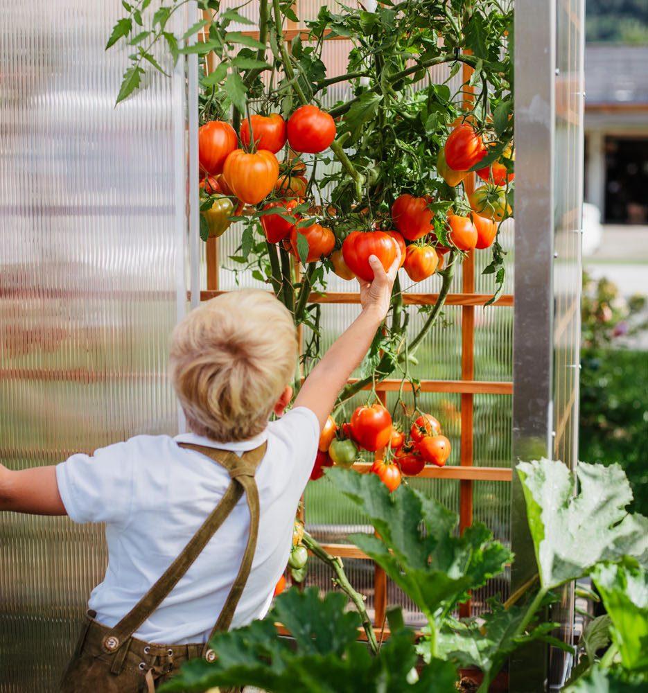 EF Hochbeet Tomatenhaus Hochbeet