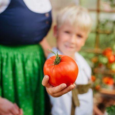 Hochbeet Tomaten anbauen